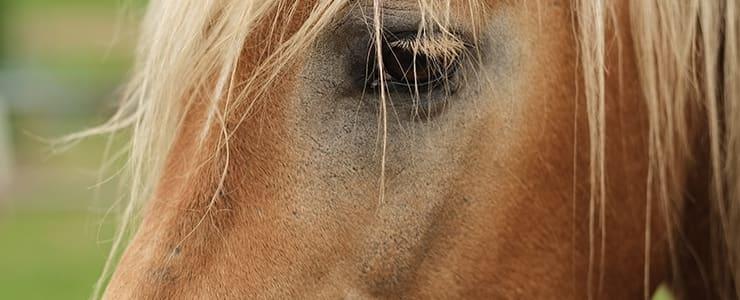 ライバルを見つめる馬