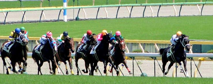 競馬場で走る馬