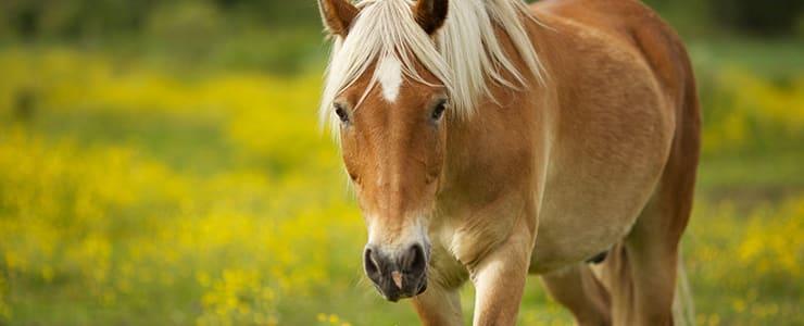 野原に佇む野生の馬