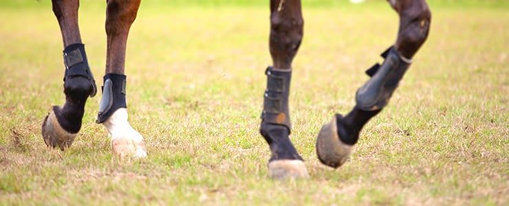 馬の脚の動き