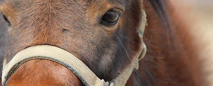 競走馬のまっすぐな瞳